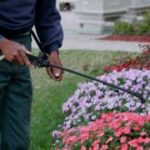 Weedkiller glyphosate 'doesn't cause cancer' – Bayer