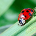 What Insects Can Actually Help Your Garden Flourish?