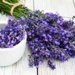 Lavender: The Flower With Many Faces