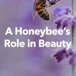 The Role of Honeybees in Beauty