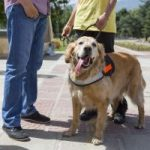 Hearing assistance dogs are changing lives