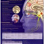 Behavioral Chronic Migraine Treatment a Cost Effective Alternative